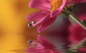 flower-drop-macro-1